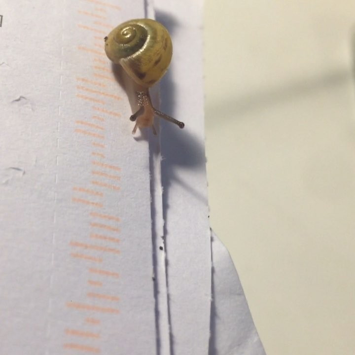 A tiny snail makes its way across an envelope.